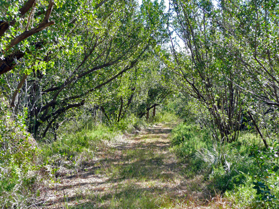 The Rowdy Bend Trail follows an old dirt road and meets up with the Snake Bight Trail on its way to the coast<br>