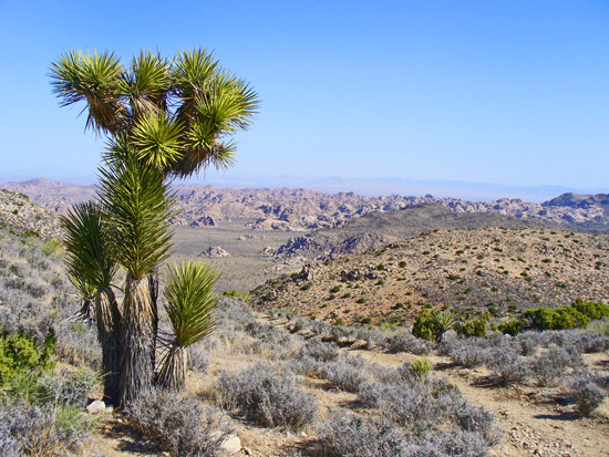 Expansive views on the Ryan Mountain Trail