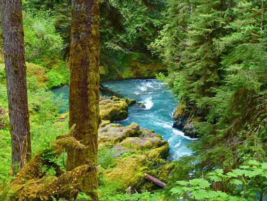 View of the Quinault River from the trail across Pony Bridge