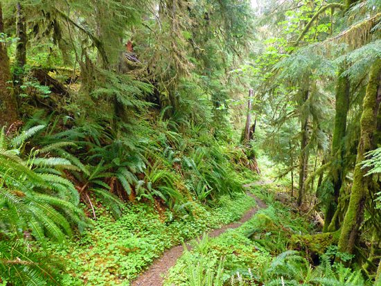 Vascular PLants in Olympic National Park